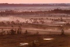 Purpurowa mgła na bagnie Obraz Stock