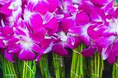 Purpurowa orchidea Obraz Stock