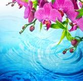 Purpurowa orchidea na pluskoczącej błękitne wody Zdjęcie Royalty Free