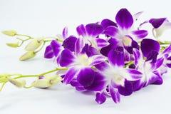 Purpurowa orchidea odizolowywają na białym tle Zdjęcia Stock