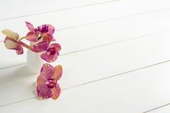 Purpurowa orchidea w wazie na białym stole Obrazy Stock