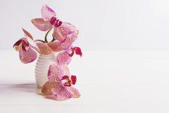 Purpurowa orchidea w wazie na białym stole Obraz Stock