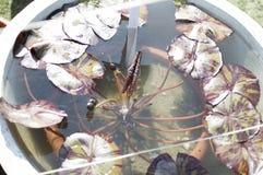 Purpurowa roślina wodna Obraz Royalty Free