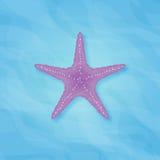 Purpurowa rozgwiazda w morzu Zdjęcia Stock