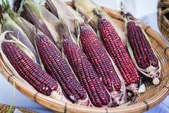 Purpurowa woskowata kukurudza w koszu na białym tle obrazy royalty free