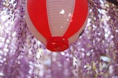 Purpurowe żałość i Japoński lampion obraz stock