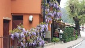 Purpurowe żałość, kolorowa wiosna Kwitnęli balkon Zdjęcia Stock