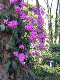 purpurowe orchidee Zdjęcie Stock