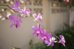 Purpurowe orchidee i zieleń Zdjęcie Stock