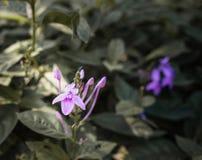 Purpurowe orchidee w ogródzie, purpury Kwitną, Fiołkowy kwiat, purpura kwiaty w dzikiej naturze Zdjęcie Stock