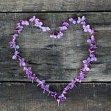 Purpurowe Serce kształt od Lilalc kwiatów Wiosna czas… wzrastał liście, naturalny tło Textured drewniana deska Mieszkanie nieatut Obraz Royalty Free