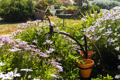 Purpurowego i białego kwiatu zakończenie up Zdjęcie Royalty Free