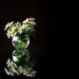 Purpurowi astery w round szklanej wazie Obraz Royalty Free