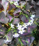 Purpurowi kwiaty Zdjęcie Stock