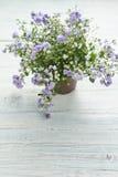 Purpurowi kwiaty obraz stock