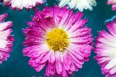 Purpurowi kwiaty w błękitnej lazur wodzie, natury tło, tapeta fotografia stock