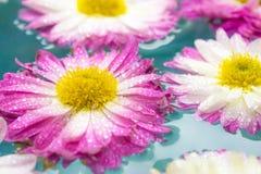Purpurowi kwiaty w błękitnej lazur wodzie, natury tło, tapeta fotografia royalty free