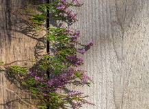 Purpurowi kwiaty wrzos na drewnianym tle, jesieni pojęcie, odgórny widok Zdjęcie Royalty Free