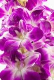 Purpurowi orchidea kwiaty Zdjęcia Stock