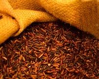 purpurowi ryż Obraz Stock