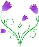 Purpurowi tulipany, kwiaty Ilustracyjni Zdjęcie Stock