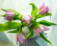 Purpurowi tulipany kwitną wpisowego makro- zielonego wiosen matek dnia natury dekoracji bukiet jaskrawego zdjęcia royalty free