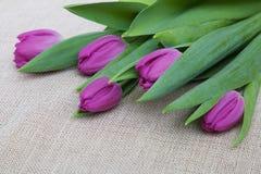 Purpurowi tulipany na brezentowym tle Fotografia Stock