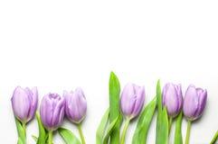 Purpurowi tulipany na perełkowej kolor płytce z kopii przestrzenią Obrazy Stock