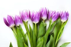 Purpurowi tulipany odizolowywający na bielu Fotografia Stock
