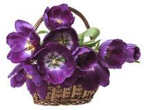 Purpurowi tulipany w koszu Obrazy Royalty Free