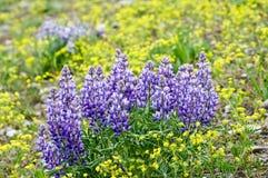purpurowi wildflowers Obraz Royalty Free