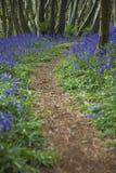 Purpurowi Wildflowers na ścieżce Obrazy Stock