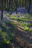 Purpurowi Wildflowers na ścieżce Fotografia Royalty Free