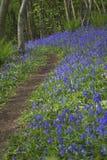 Purpurowi Wildflowers na ścieżce Zdjęcia Stock