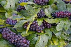 Purpurowi winogrona Zdjęcia Royalty Free
