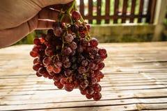 Purpurowi winogrona świezi Fotografia Royalty Free