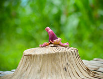 Purpurowy Agasta kwiat Fotografia Royalty Free