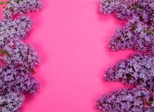 Purpurowy bez na tle Fotografia Stock
