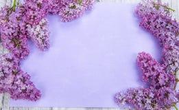 Purpurowy bez na tle Obraz Stock