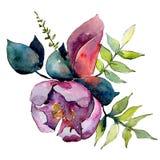 Purpurowy botaniczny kwiat Odosobniony bukiet ilustracji element zielony liść tła bazy projekta ustalona akwarela ilustracja wektor