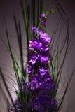 Purpurowy bukiet Obrazy Royalty Free