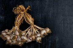 Purpurowy czosnek na czarnym drewnianym tle, Zamyka up Obrazy Royalty Free