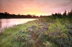 Purpurowy dżdżysty wschód słońca nad dzikim jeziorem Zdjęcia Royalty Free