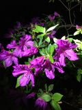 purpurowy deszcz Obrazy Royalty Free