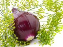 Purpurowy dil i cebula Obraz Stock
