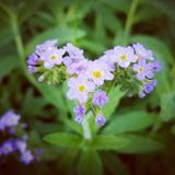 purpurowy dzikie kwiaty Obrazy Stock