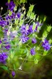 Purpurowy Dzwonkowy kwiat Fotografia Stock