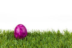 Purpurowy Easter jajko na zielonej trawie na białym odosobnionym tle Obraz Royalty Free