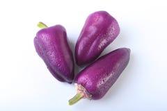Purpurowy egzotyczny kolorów dzwonkowych pieprzy bielu tło Zdjęcie Stock