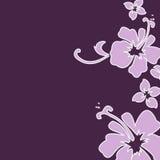 purpurowy hibiskus ilustracji